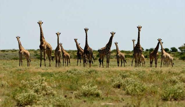 Botswana Safari Holiday