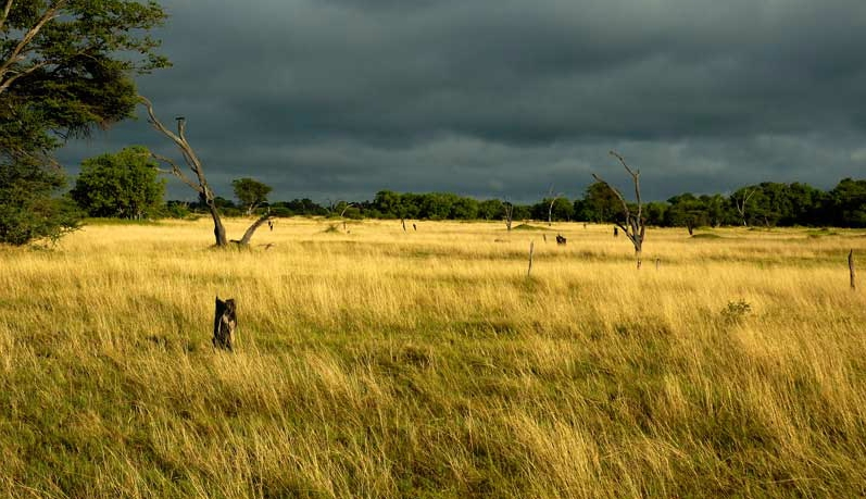 Early morning rains in the Okavango