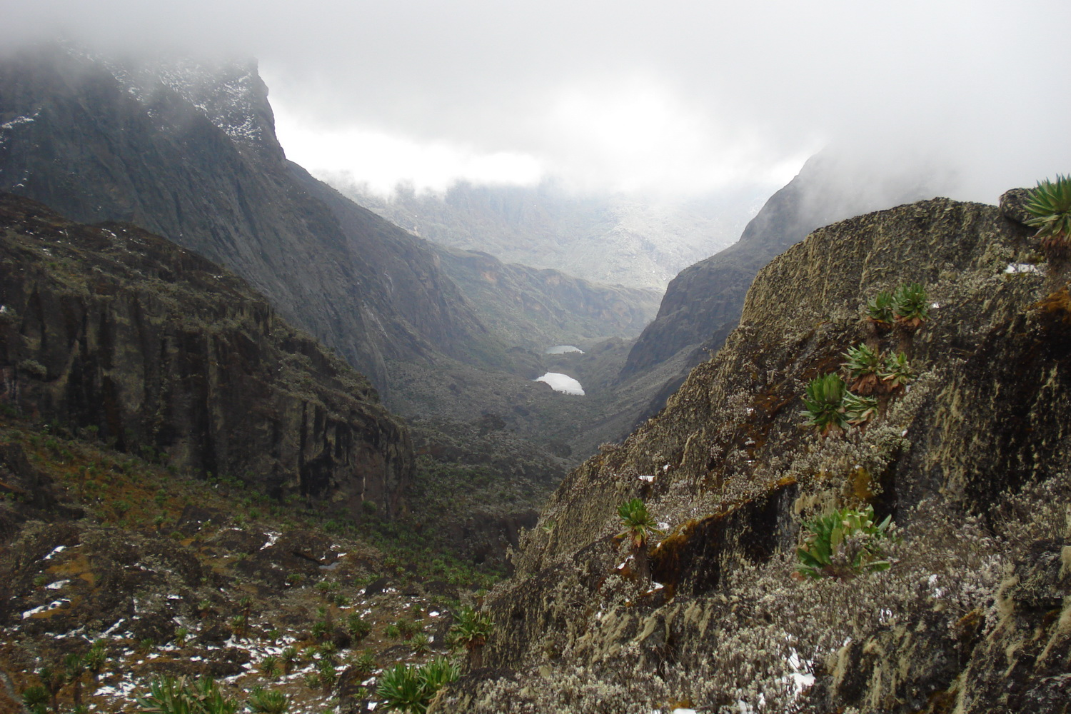 Trekking Rwenzori Mountains