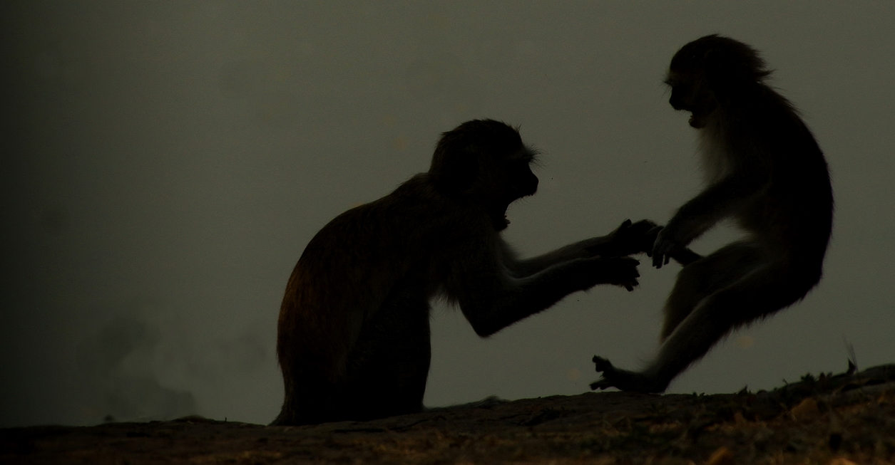 Photographic safari to Zambia