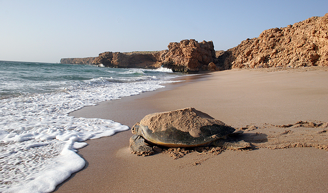 turtle adventure holiday in oman