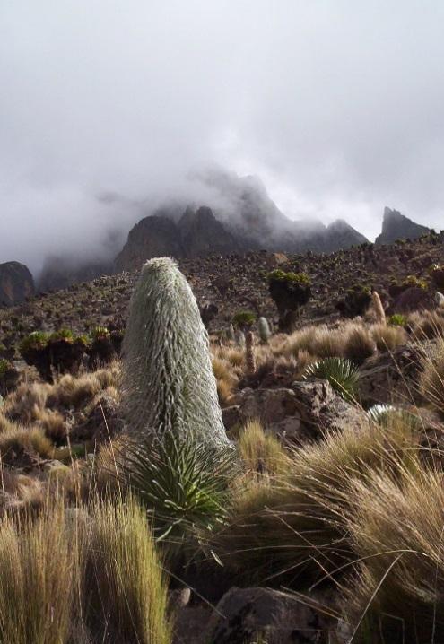 Climb Mount Kenya Peter