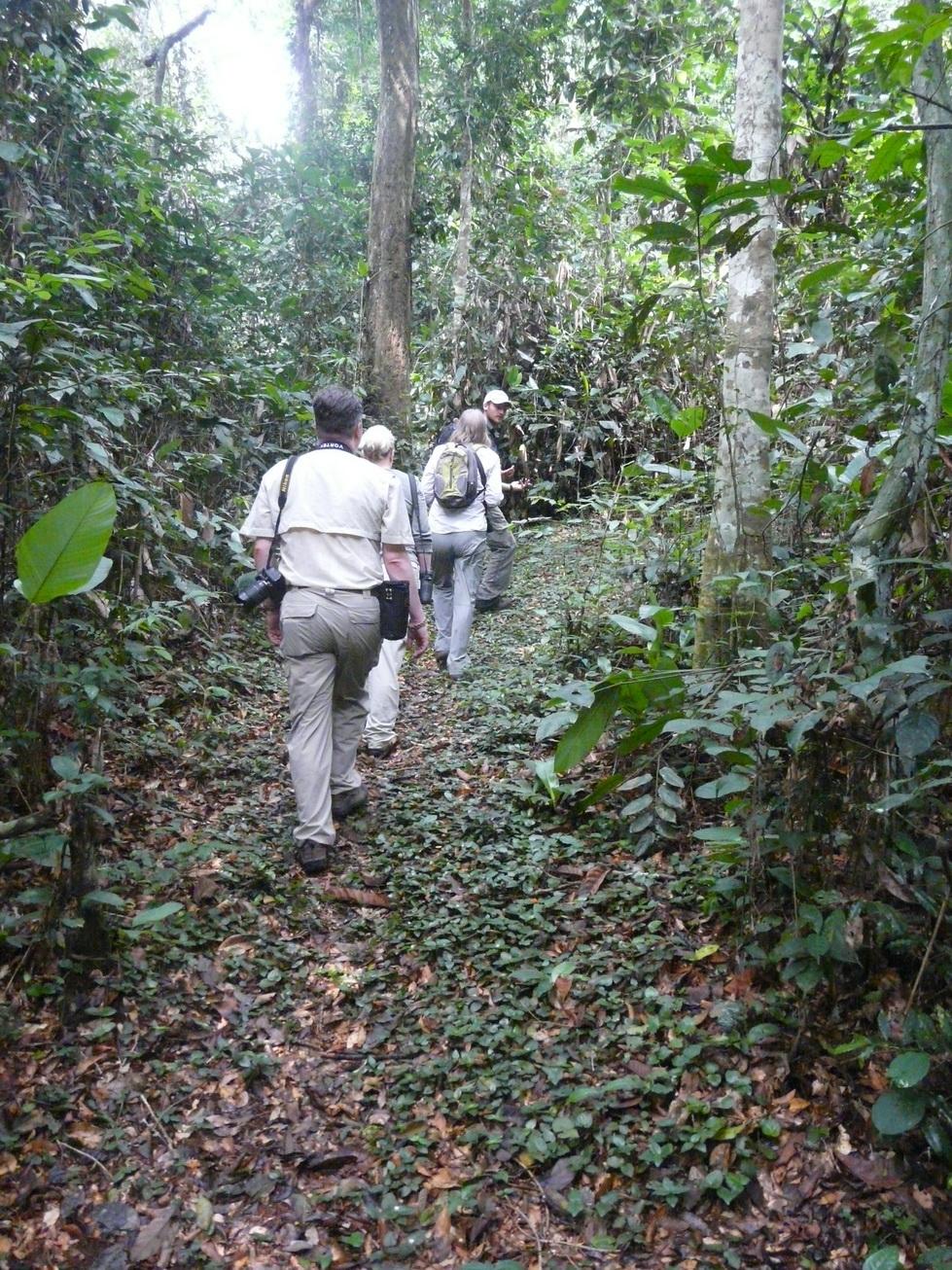 Gorilla safari in Odzala-Kokoua National Park, Congo