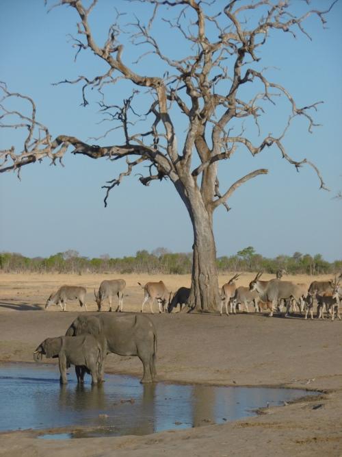 Zimbabwe Hwange National Park