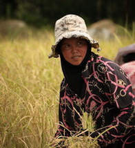 Female farmer in North Cambodia