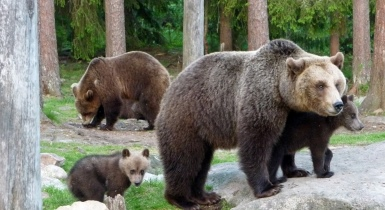Finland Holidays   Bear-Viewing Tours