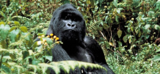 Uganda for primate safaris and Queen Elizabeth NP